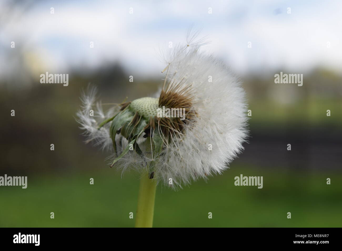 Blowin' in the Wind - Stock Image