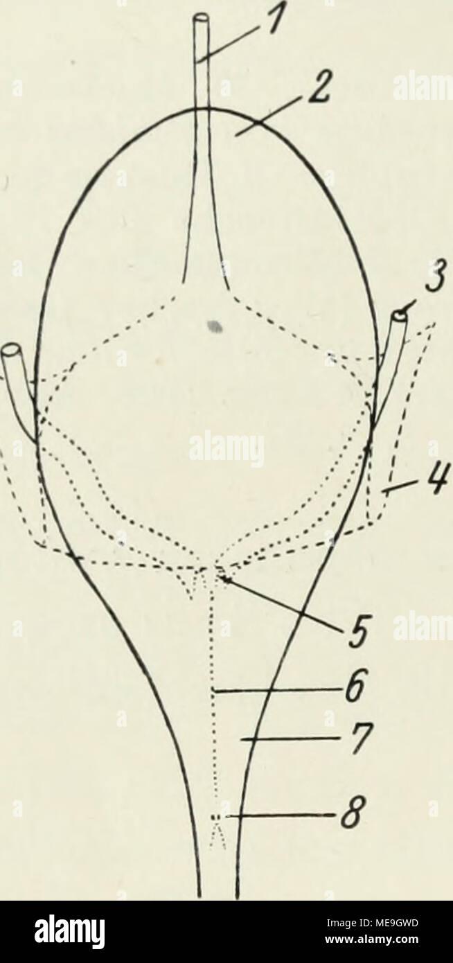 Peritoneum Stock Photos & Peritoneum Stock Images - Alamy