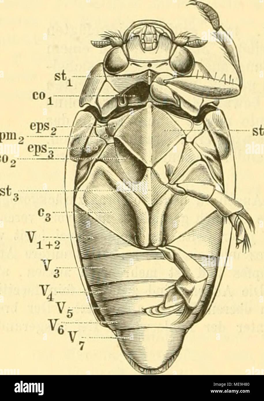 Ausgezeichnet Vaskuläre Anatomie Des Herzens Fotos - Menschliche ...