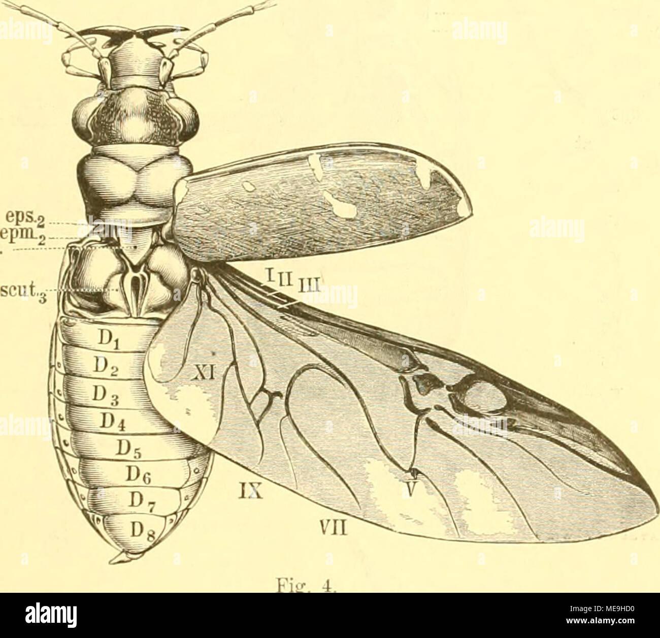 Fantastisch Anatomie Von Drosophila Melanogaster Fotos - Menschliche ...