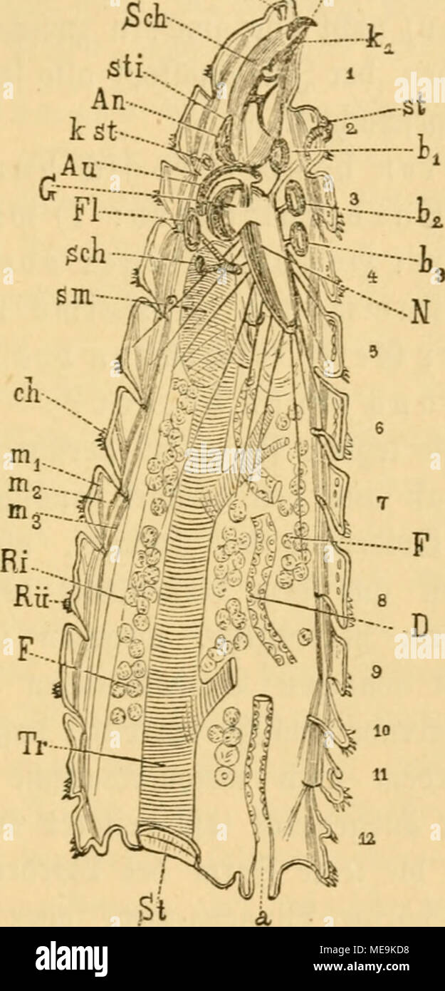 Gemütlich Anatomie Und Physiologie Laborhandbuch 9. Ausgabe Ideen ...