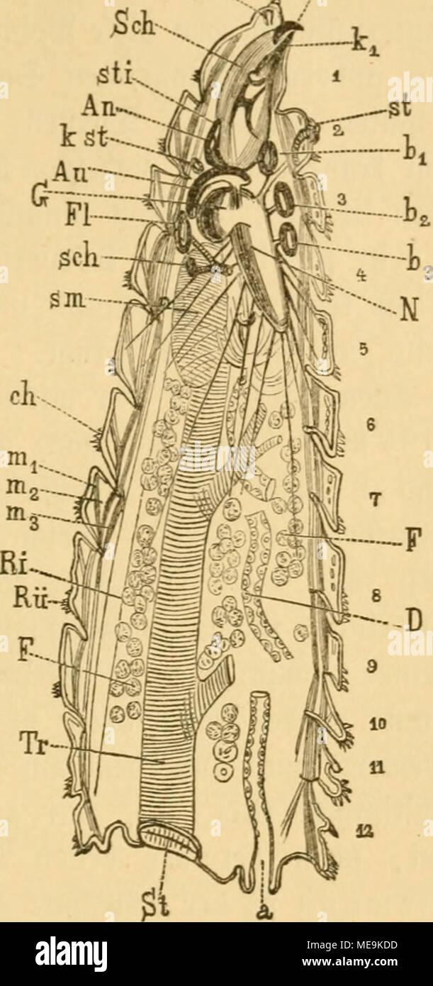 Ziemlich Innere Anatomie Eines Hais Fotos - Physiologie Von ...