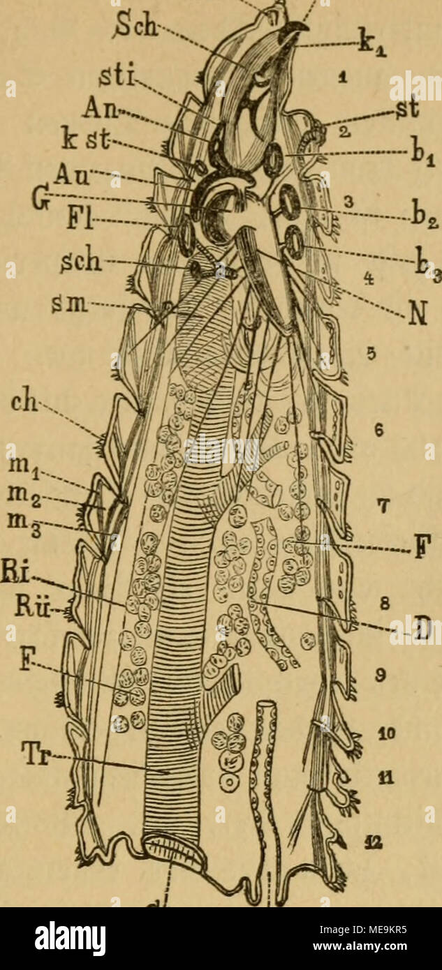 Groß Angelrolle Anatomie Bilder - Menschliche Anatomie Bilder ...