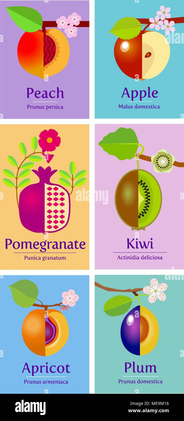 Vector illustration collection of various style fruit: apple, peach, pomegranate, kiwi, apricot, plum  with green leaves and flower blossom hanging on - Stock Vector
