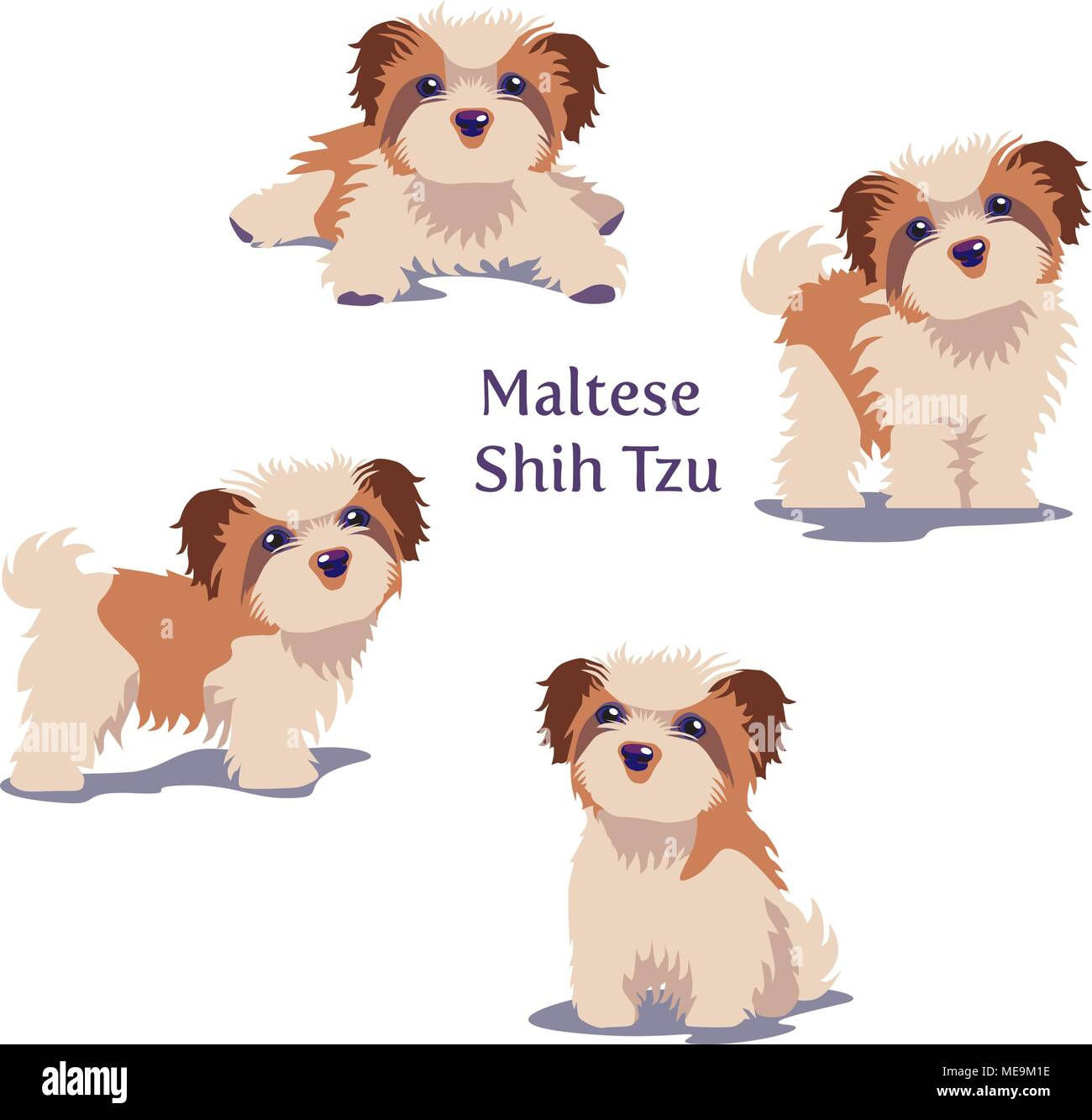 Vector illustration of Maltese dogs puppies in different poses isolated on white background. - Stock Image