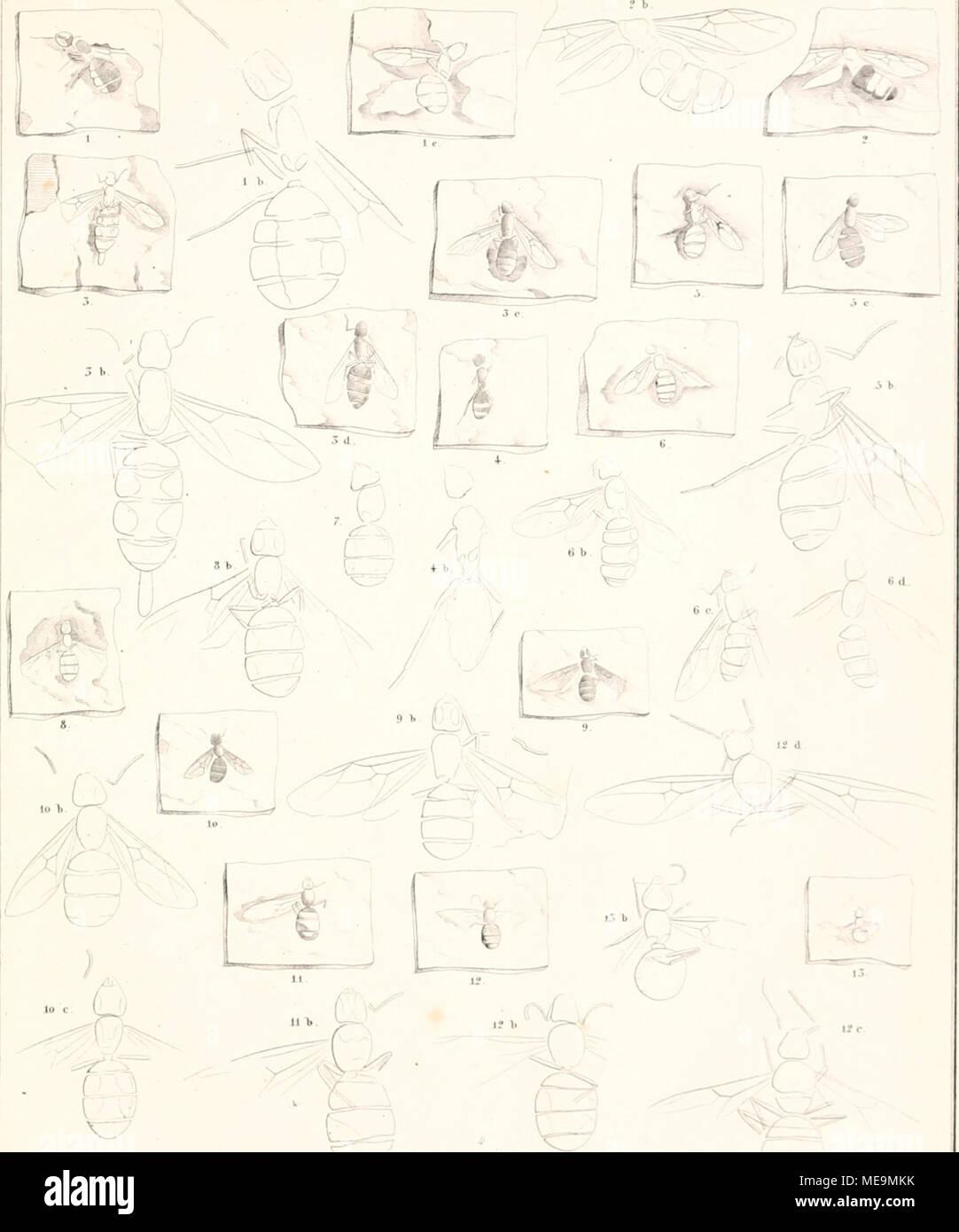 Erfreut Hirnnerv 8 Galerie - Anatomie Ideen - finotti.info