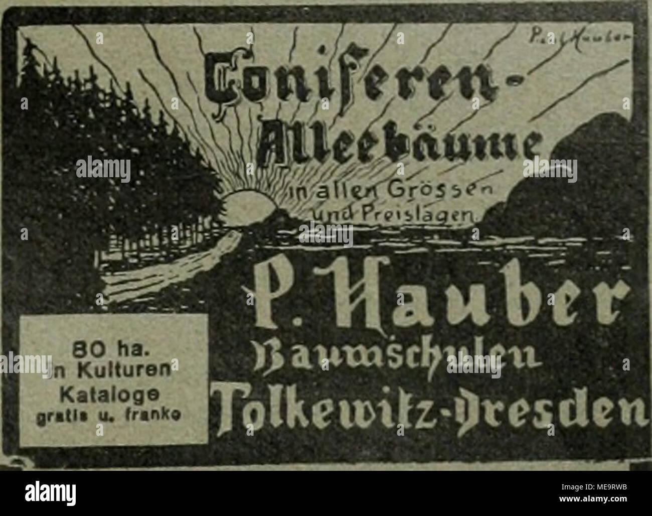 """. Die Gartenkunst . Heckenpflanzen Ziergehölze Rosen - Stauden GoptenweriiZBugB u. Beröte ^(.«fottnoWl 100 Winlerharhe ^BuiTEnsTAUDEn y BLÜTEMBERG', in 25 Sorten ncUit 2 ... ^^^^^..^^ » illustr Handbuch , Grossblättrige Ulmen mehrmals verpflanzte tadeUosr Stämme. 18—25 cm. St.-Umfg """" .- mehrere iOOO St. Coniferen, extra starke Pflanzen mit festem Ballen empfiehlt G' D. Böhije, Baumschulen, Westerstede in Oldenburg. Stock Photo"""