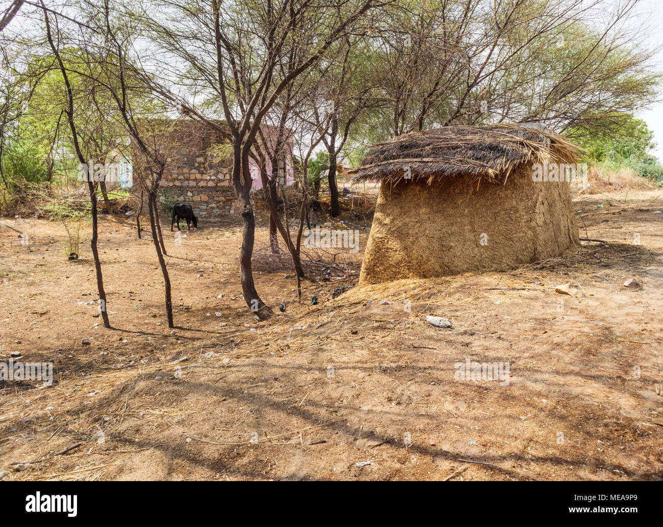 Traditional farming methods: view of typical roadside structure made of dried cow dung stored to be used for fuel, near Dausa, Rajasthan, north India - Stock Image
