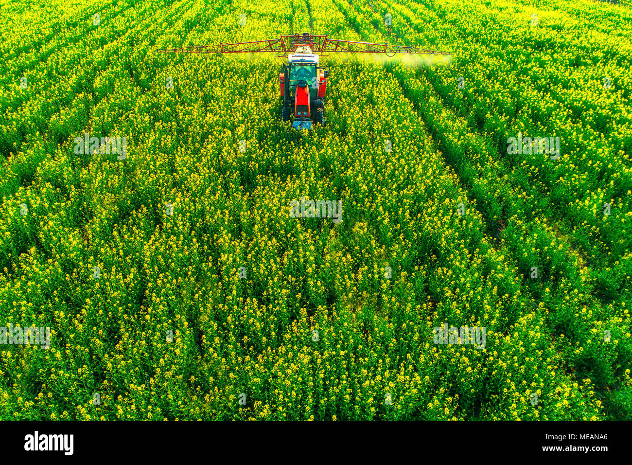 Aerial view of farming tractor plowing and spraying on field. Stock Photo