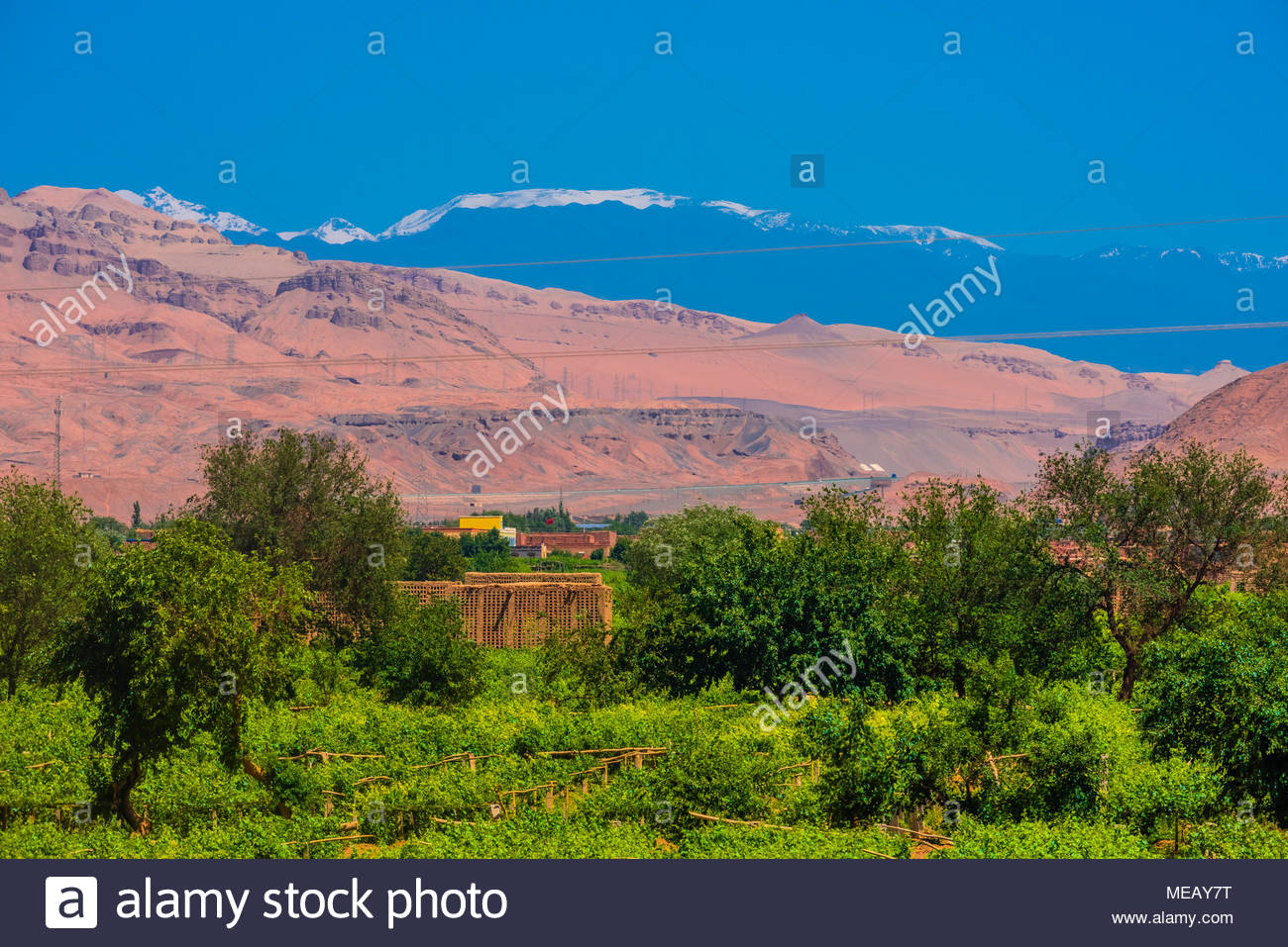 Grape drying houses and vineyards for grapes (to make raisins) near the Astana Cemetery is an ancient cemetery 37 kilometres (23 mi) southeast of Turp - Stock Image