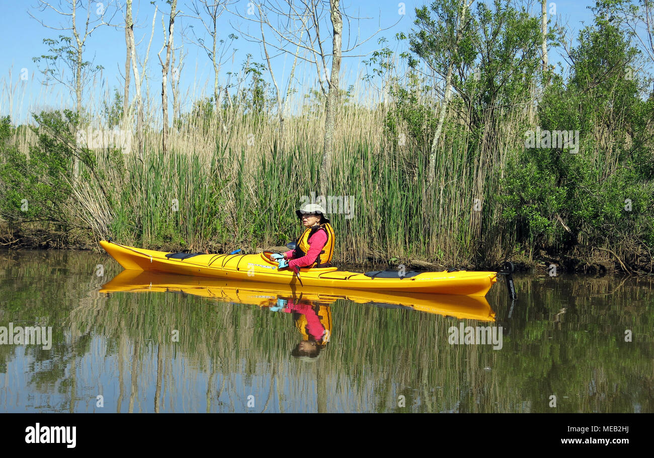 kayaking on tidal creek with still water reflections and swamp background - Stock Image