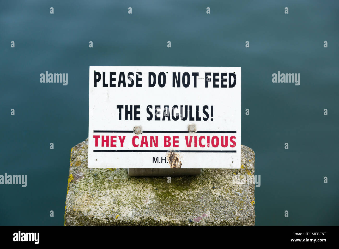 Please do not feed the seagulls sign with the warning that they can be vicious to discourage agressive behaviour and attacks in Mevagissey Cornwall Stock Photo
