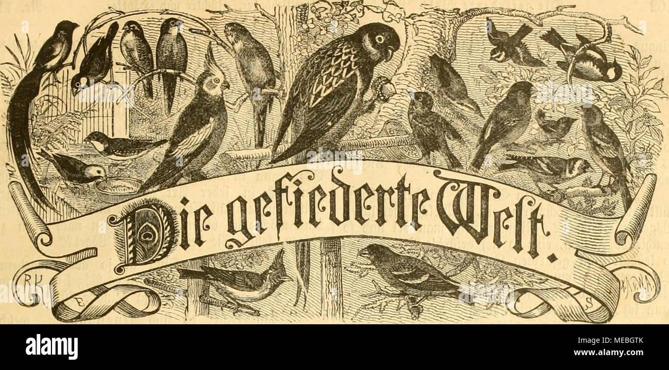 Gemütlich Song Unter Der Anatomie Song Grau Zeitgenössisch ...