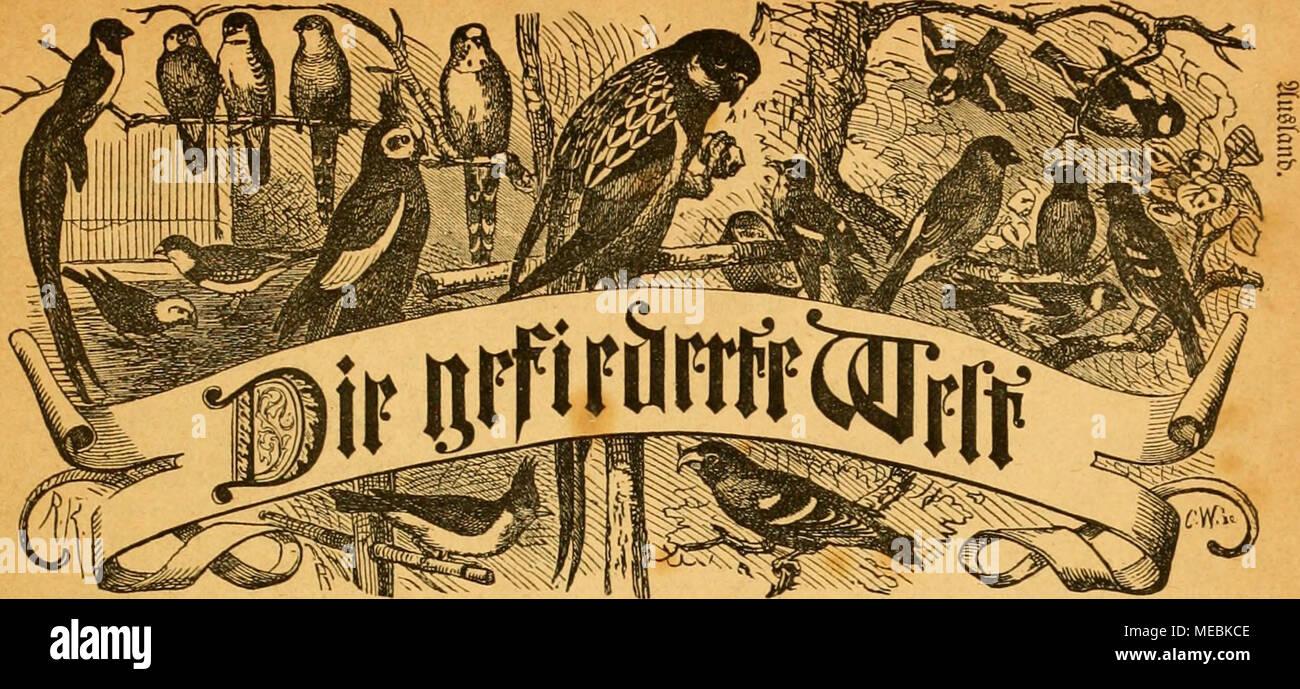 Die Gefiederte Welt . 3eitfd)rlft Für S^ogcllicbljaber, U003d3üdjtci Uub .