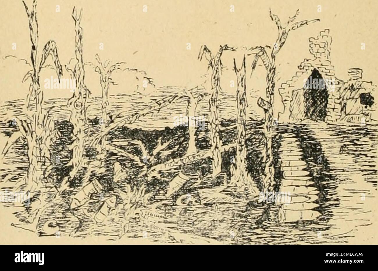 . Die Gartenwelt . Abb. 6. Zerrissene Bäume in der Nähe eines aufgeflogenen russischen Geschoßlagers. - Stock Image