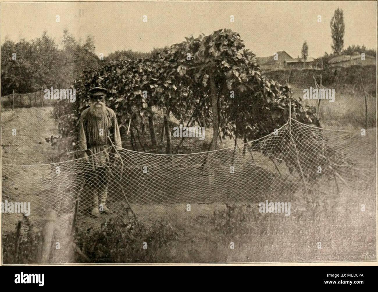 . Die Gartenwelt . Weinanlagen eines Bauern in Astraciian. Stock Photo