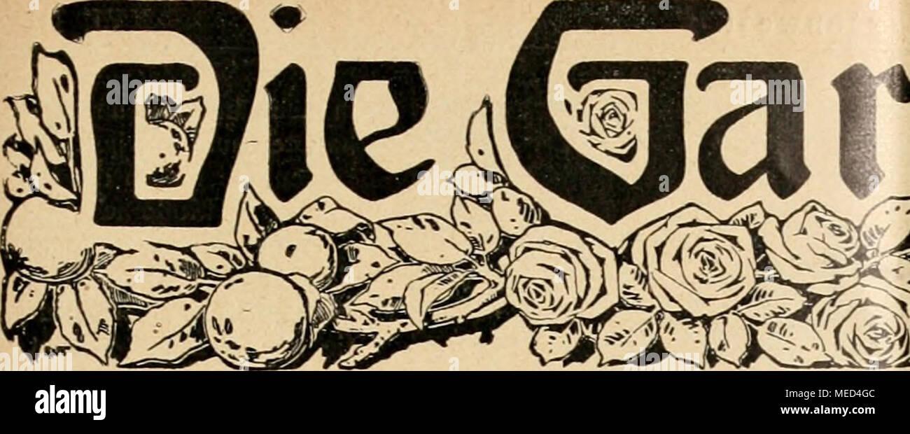 . Die Gartenwelt . ifartentflelt Illustrierte Wochenschrift für den gesamten Gartenbau. Jahrgang XVI. 9. März 1912. Nr. 10. Nachdruck und Nachbildung aus dem Inhalte dieser Zeitschrift werden strafrechtlich verfolgt. Zwiebel- und Knollenpflanzen. Eucharis amazonica. Von Karl Kunz, Baron Alfons v. Rothschildscher Garteninspektor, Wien, Hohe Warte. (Hierzu eine Abbildung-.) Zu den reizendsten Schnittblumen gehören ohne Zweifel blühende Eucharis, die in unseren neuzeitlichen Pflanzen- sammlungen leider immer seltener werden. Vielseitig ist man der Ansicht, daß man die Eucharis nur zweimal im Jahr Stock Photo