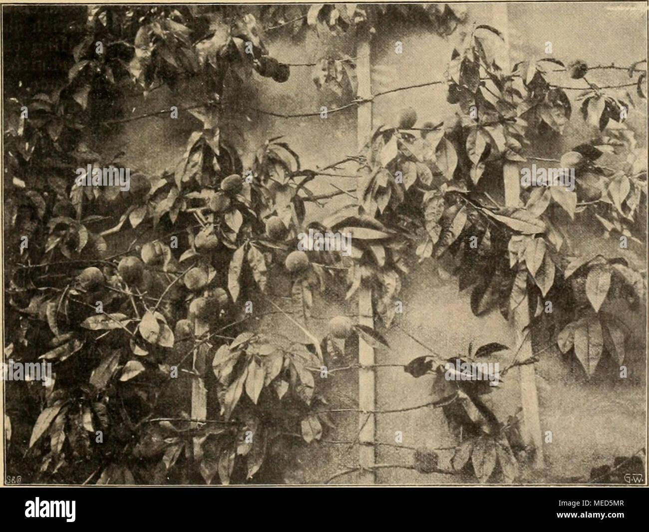 Eigenschaf Stock Photos & Eigenschaf Stock Images - Alamy