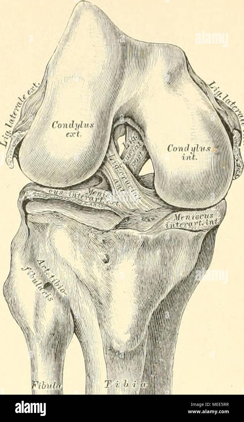 Nett Anatomie Und Physiologie Kapitel 4 Bilder - Menschliche ...