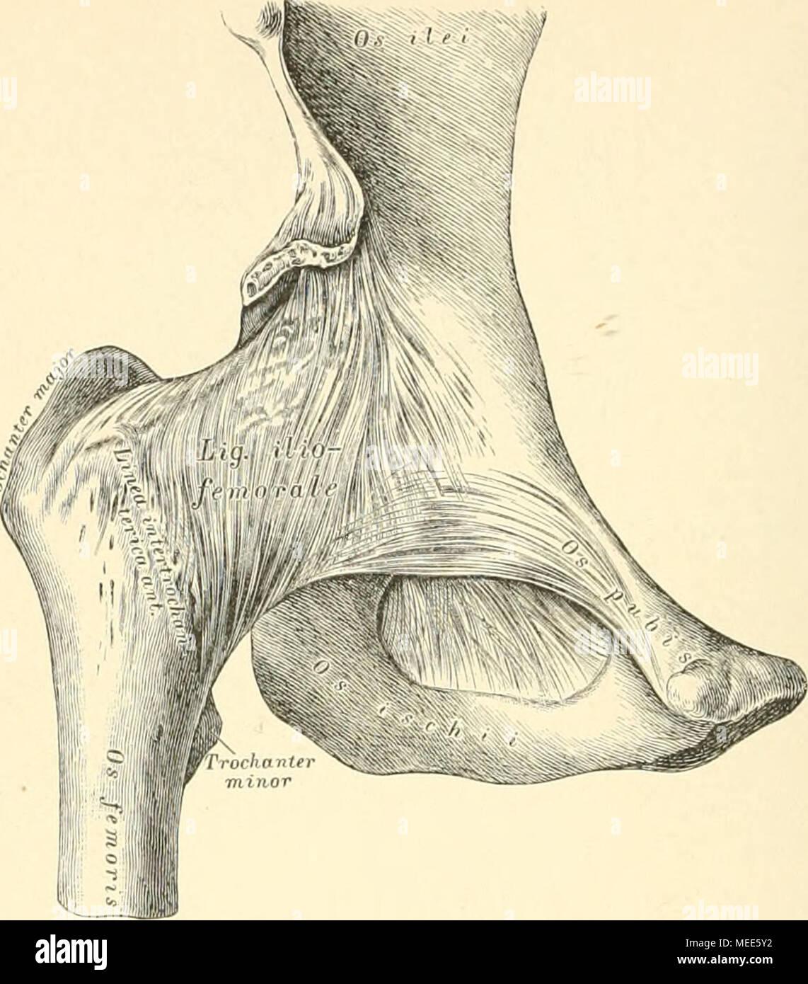 Tolle Anatomie Des Hais Bilder - Menschliche Anatomie Bilder ...