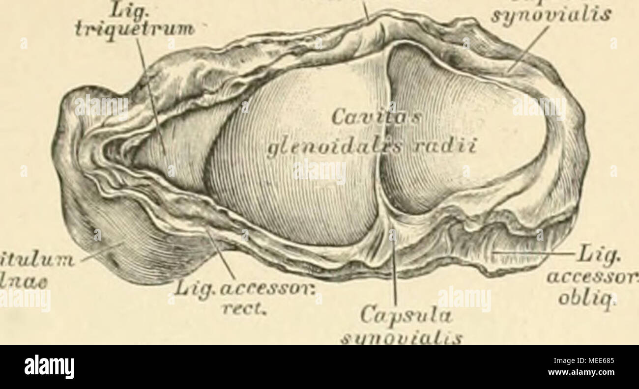 Die descriptive und topographische Anatomie des Menschen . 181. Die ...