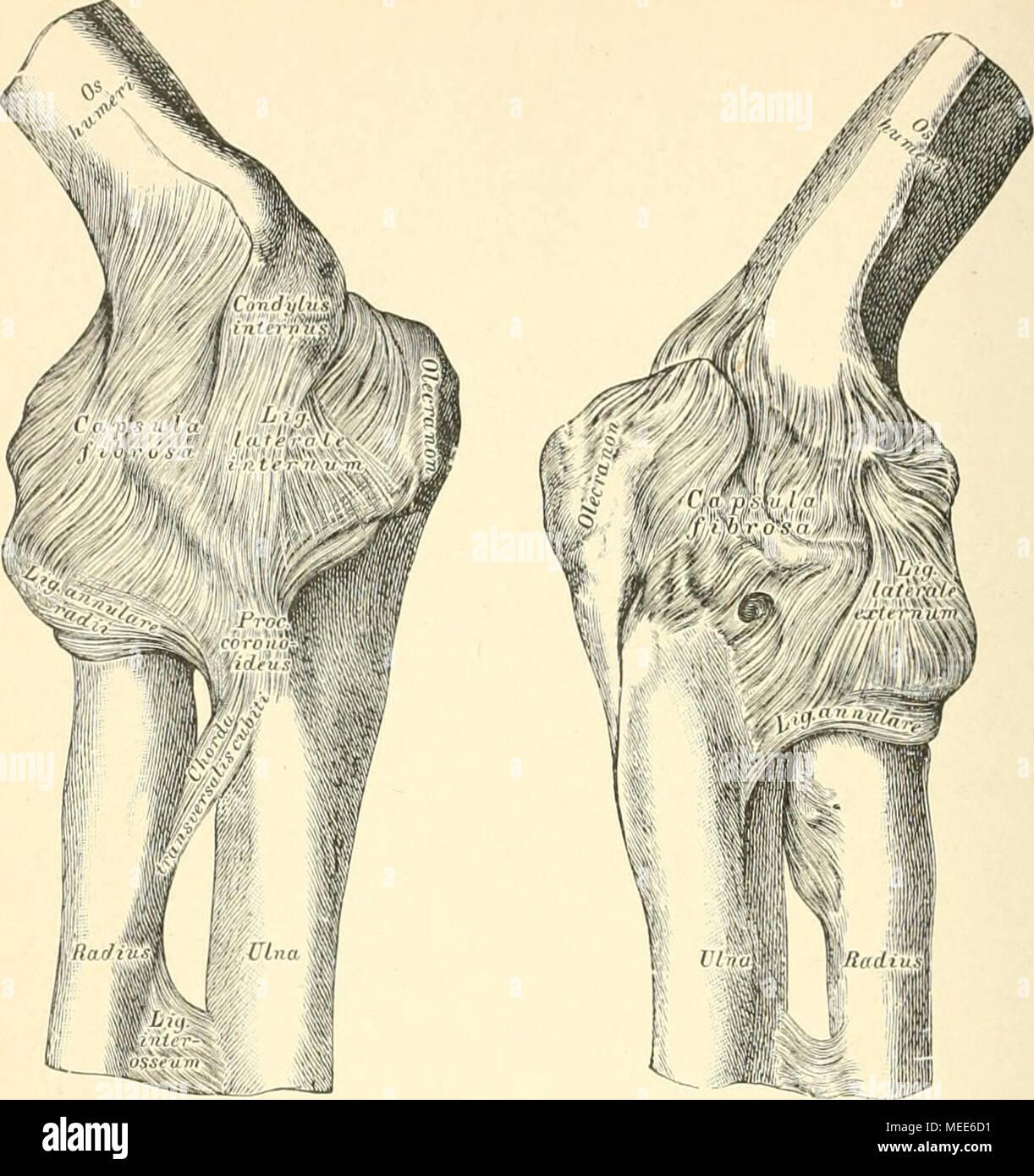 Großzügig Bugmann Kapsel Galerie - Anatomie Und Physiologie Knochen ...