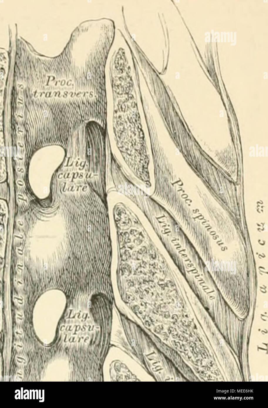 Nett Anatomie Und Physiologie 9. Auflage Galerie - Menschliche ...