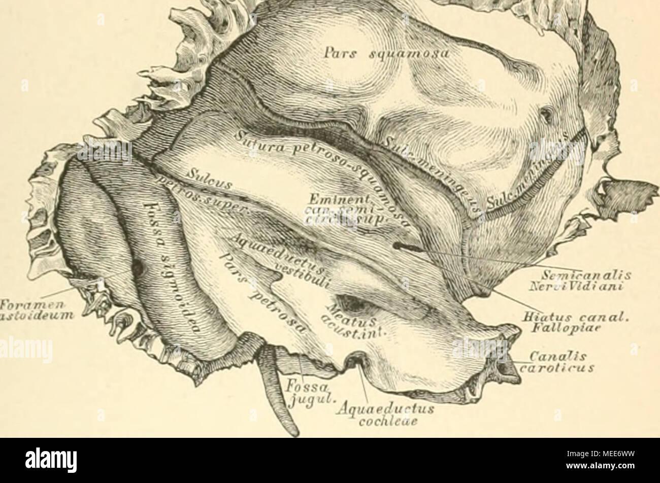 Niedlich Krabbe Anatomie Diagramm Galerie - Menschliche Anatomie ...