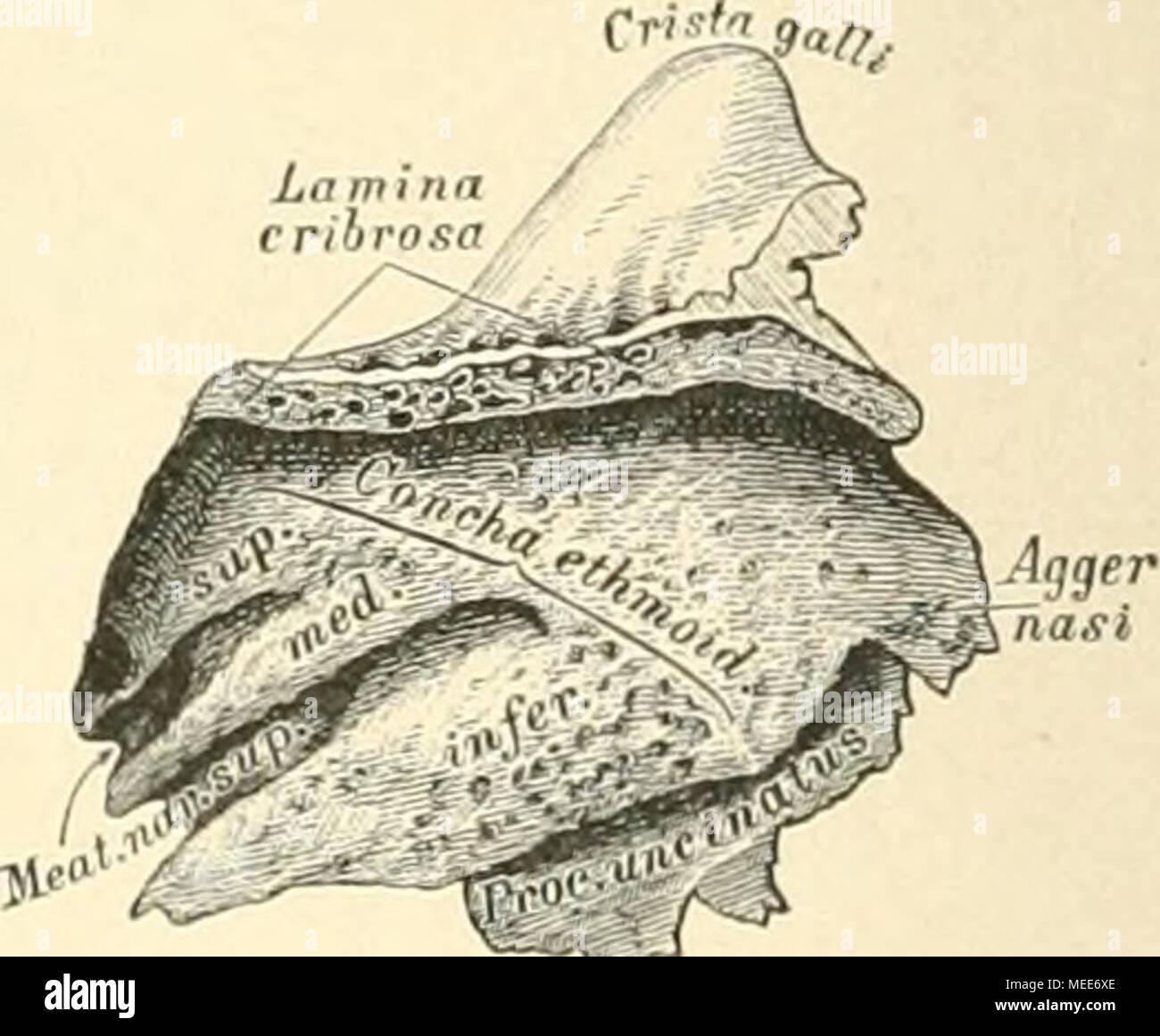 Die descriptive und topographische Anatomie des Menschen . 15 ...