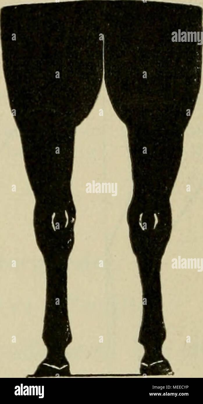 Die Beurteilung des Pferdes . Normale Stellung der Hinterbeine von ...