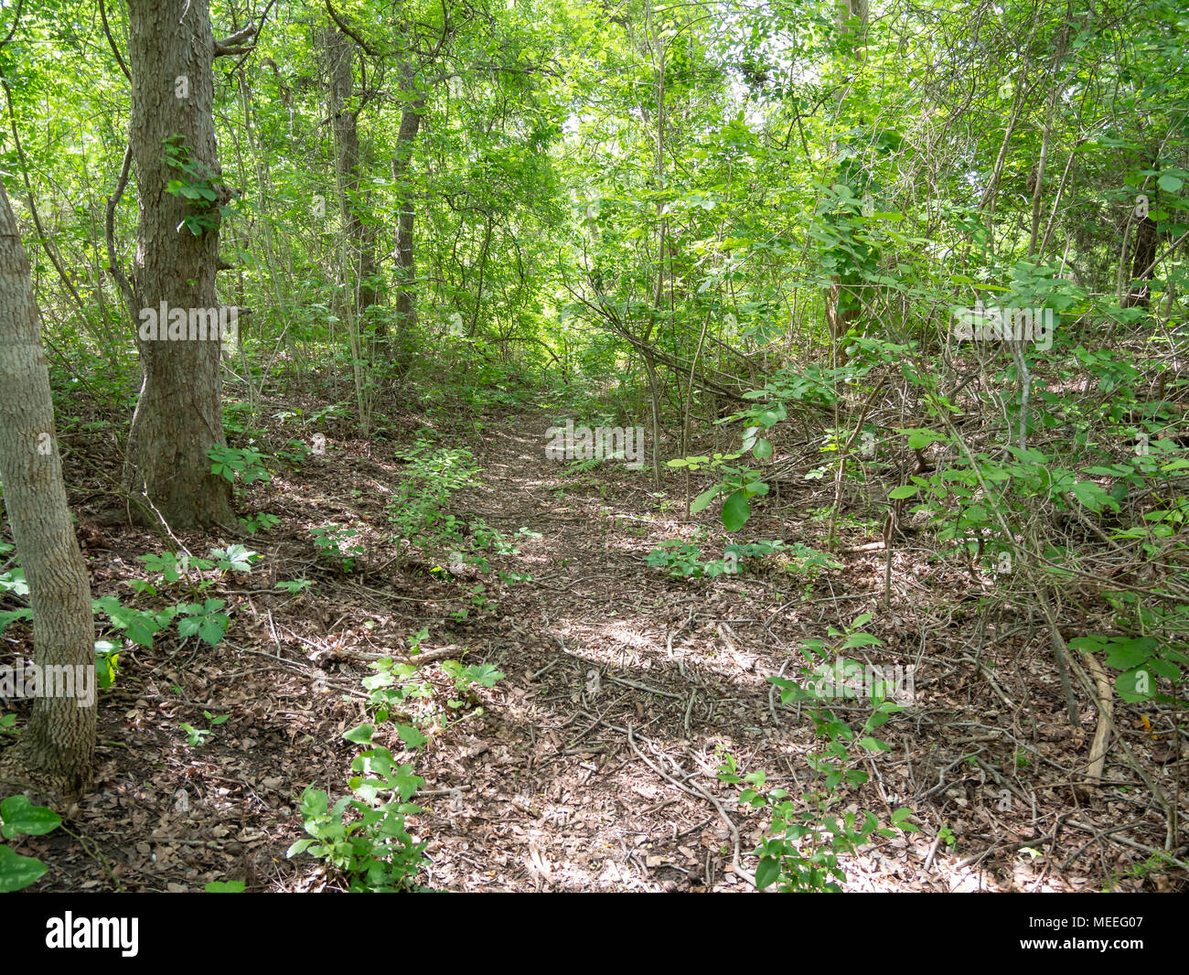 Quiet Walk Through Dense Wooded Are with Bright Sun Stock Photo