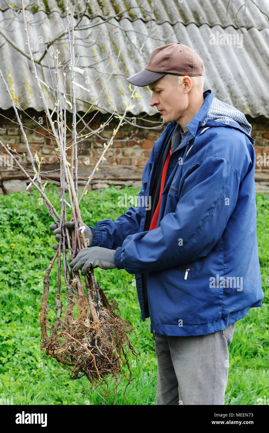 Planting Fruit Trees A Man Is Holding A Dozen Of Plants Stock Photo Alamy
