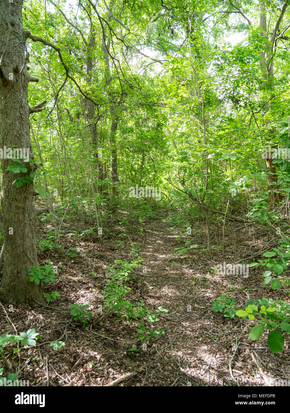 Dense and Green Forest During a Sunny Day Stock Photo