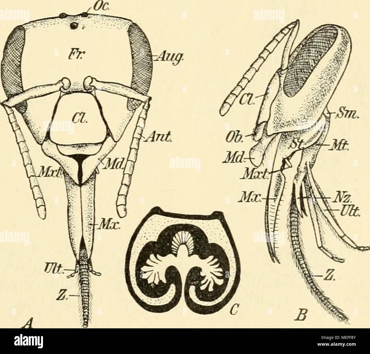 Ausgezeichnet Anatomie Oberlippe Ideen - Physiologie Von ...