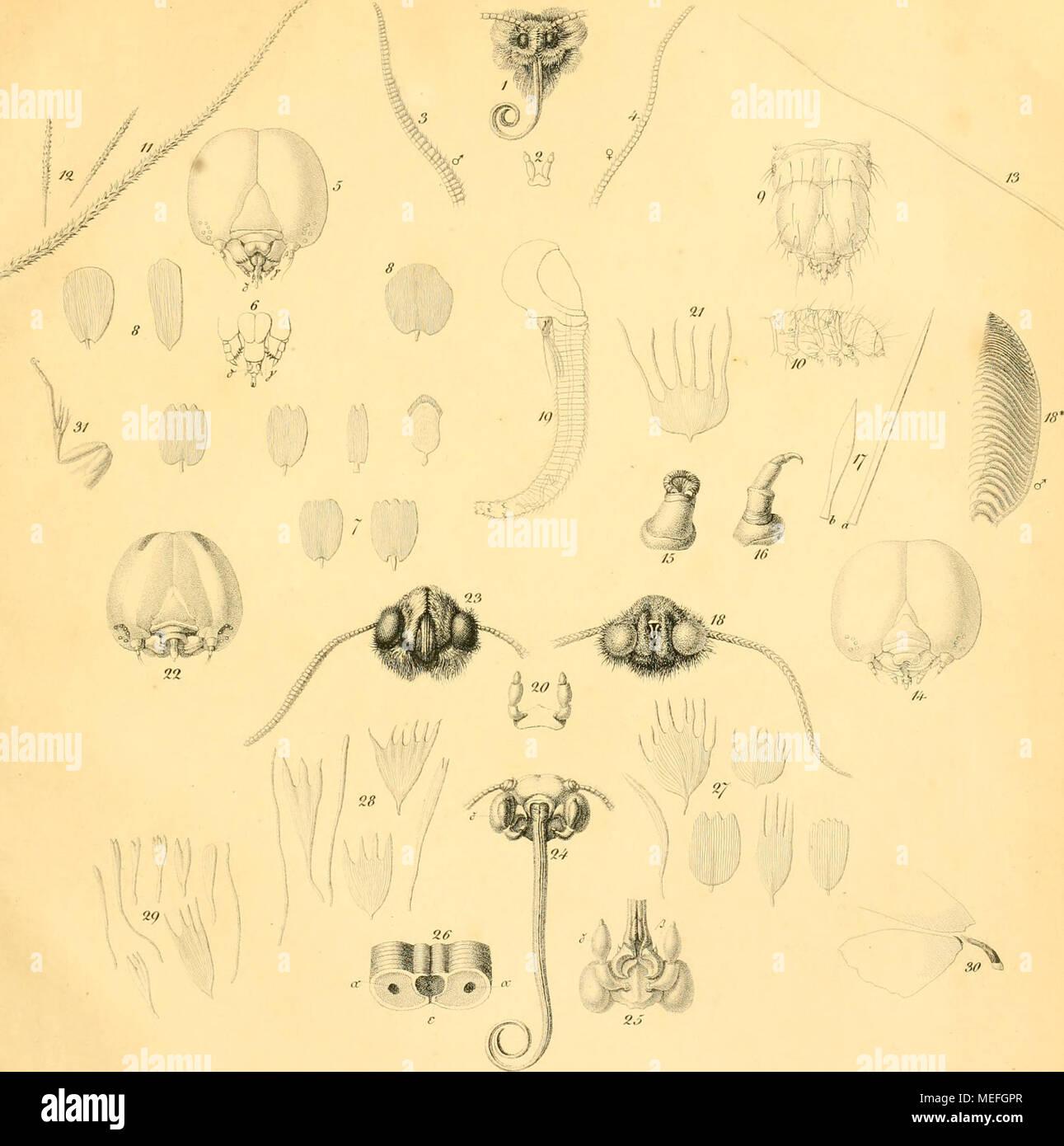 Wunderbar Beschreibung Der Anatomie Und Physiologie Kurs Galerie ...