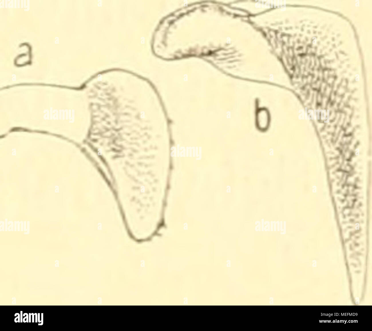 Großzügig Menschliche Anatomie Und Physiologie Marieb 10. Auflage ...