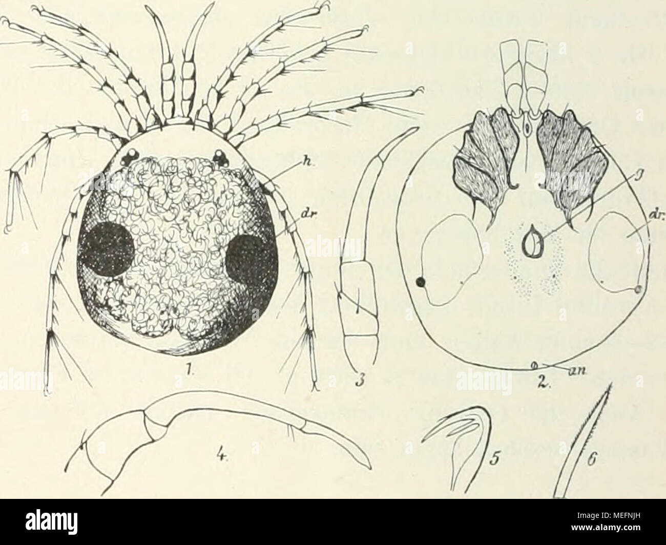 Die Fauna Südwest-Australiens; Ergebnisse, hrsg. von W. Michaelsen ...