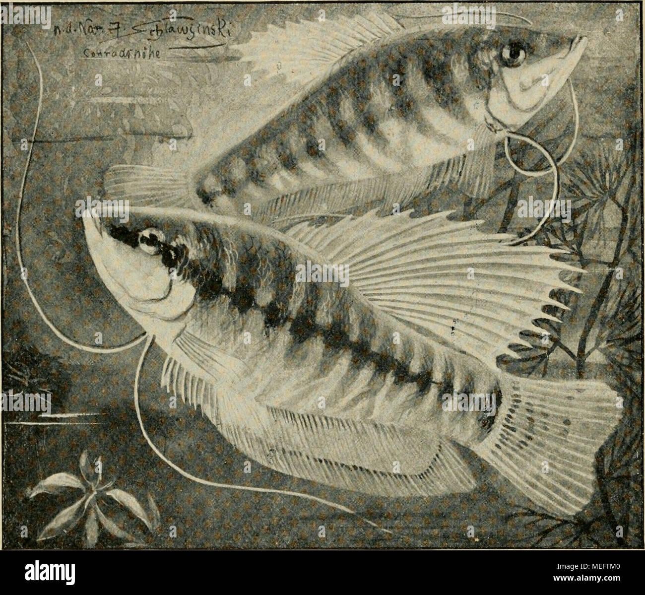 Beste äußere Anatomie Der Fische Und Ihre Funktionen Galerie ...