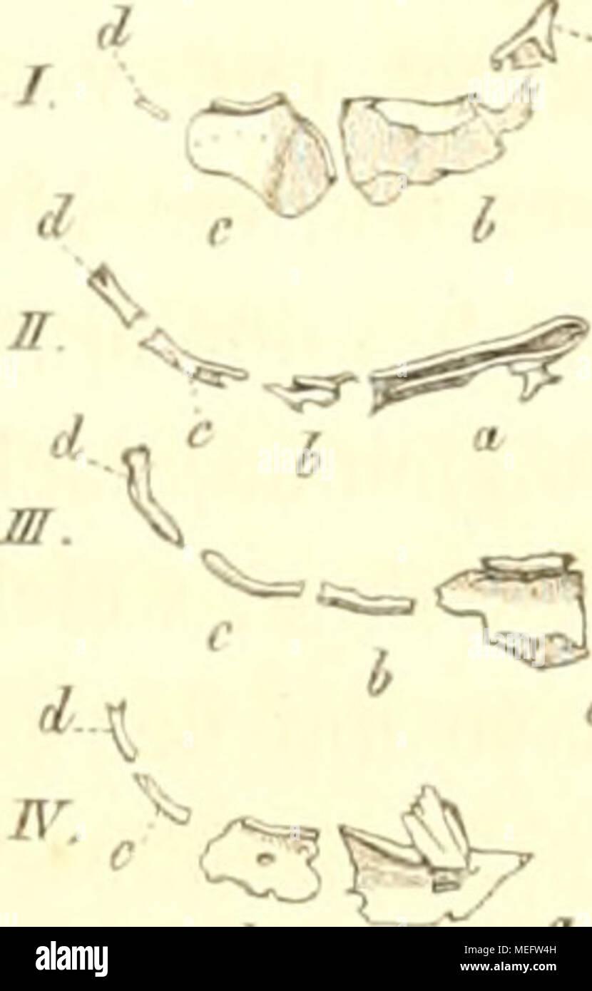 Cherne Stock Photos Images Alamy Ossa Wiring Diagram Die Familie Der Mormyren Eine Anatomisch Zoologische Abhandlung Mormyeen