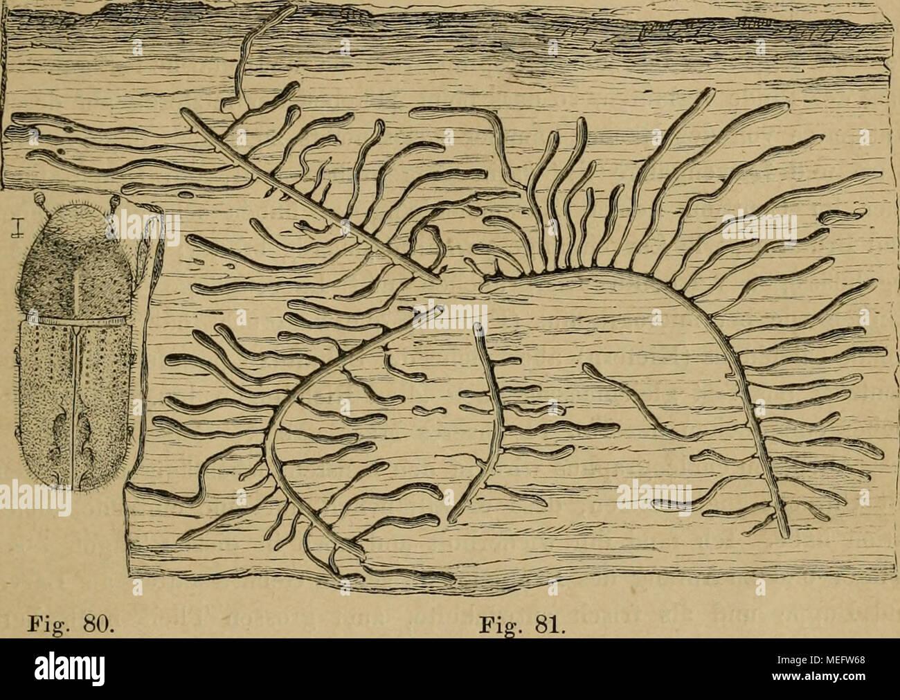 Nett Antworten Auf Laborhandbuch Für Anatomie Und Physiologie ...