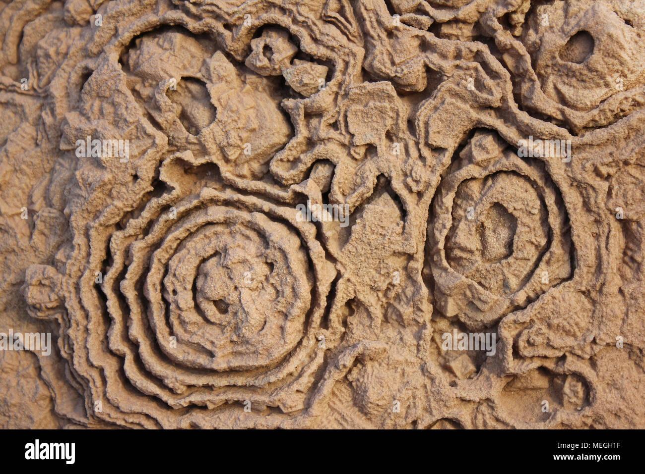 Stromatolite Fossil Patterns, Cretaceous - Stock Image