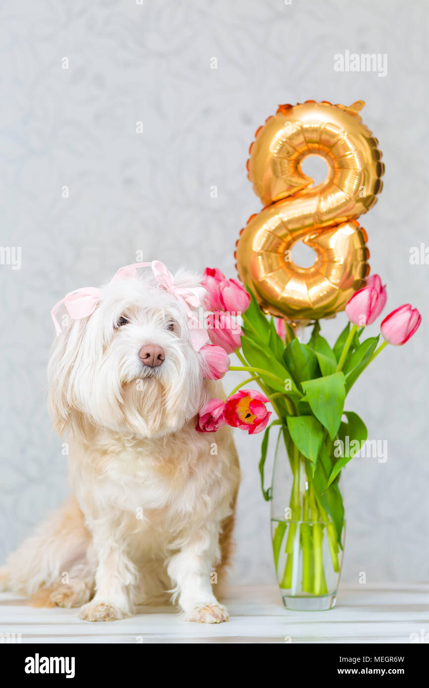 White dog, sitting next to a bouquet of flowers in a vase. Pink ...