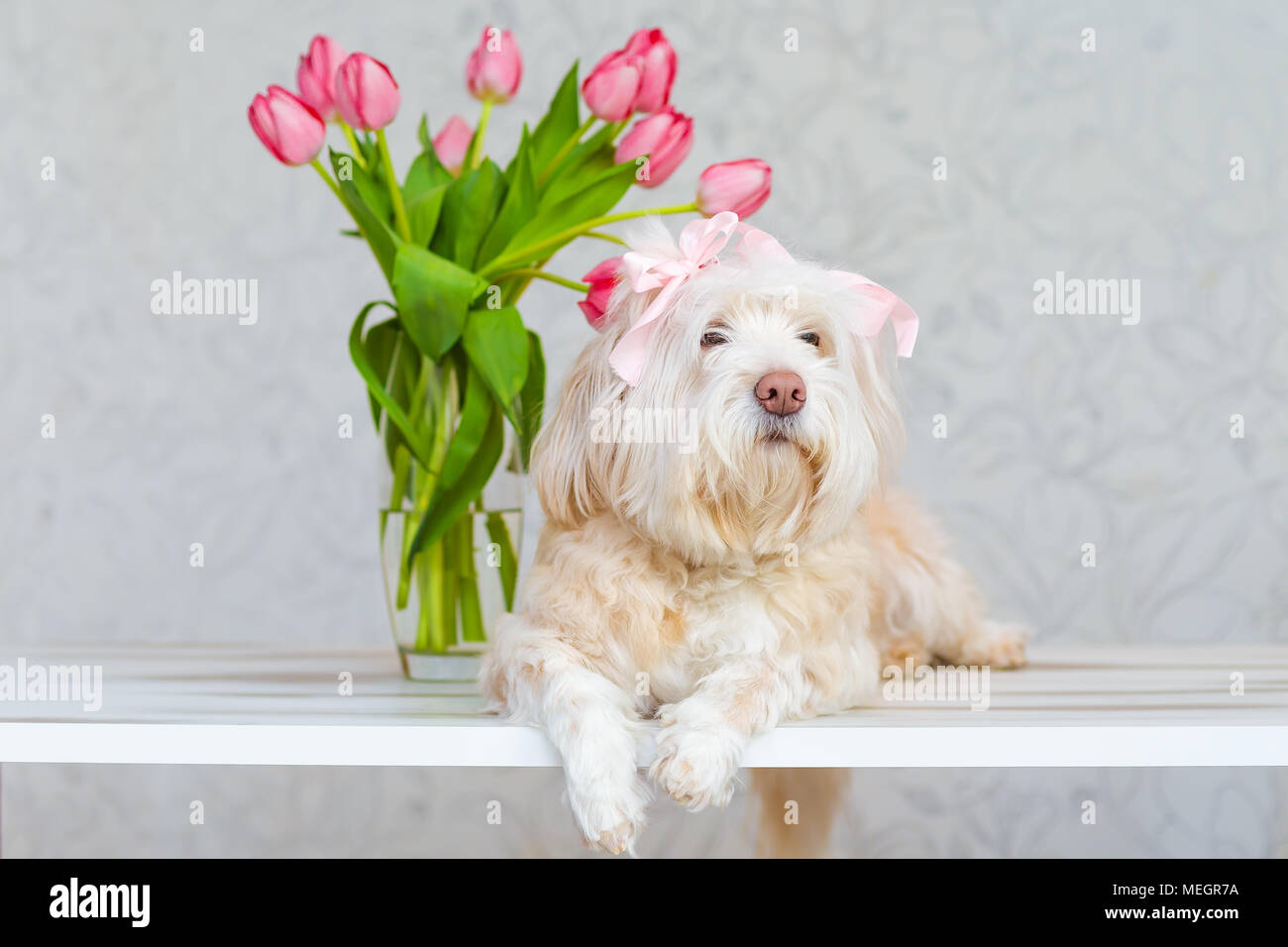 White Dog Sitting Next To A Bouquet Of Flowers In A Vase Pink