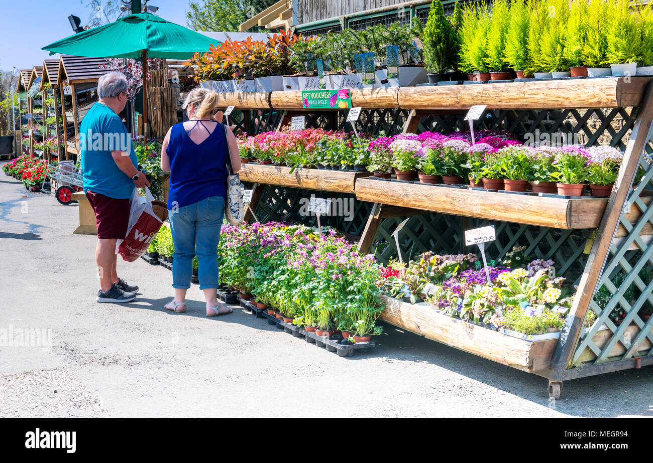 couple selecting plants at a garden centre - Stock Image