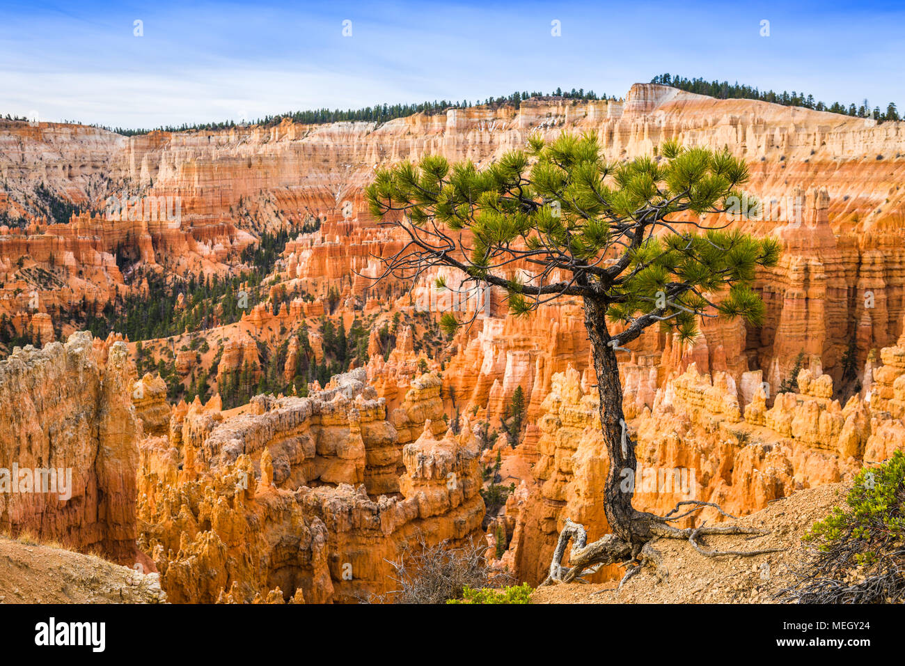 Bryce Canyon National Park, Utah, USA with a tree on the rim. - Stock Image