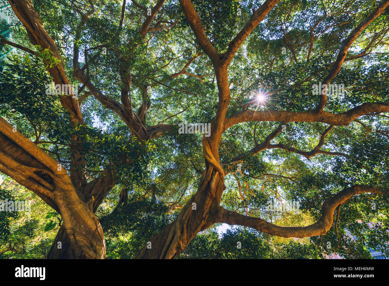 Sun rays light shines through trees and branches of jungle forest, China - Stock Image