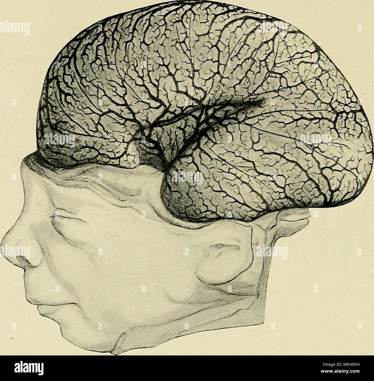 Die Entwickelung des menschlichen Gehirns : während der ersten ...