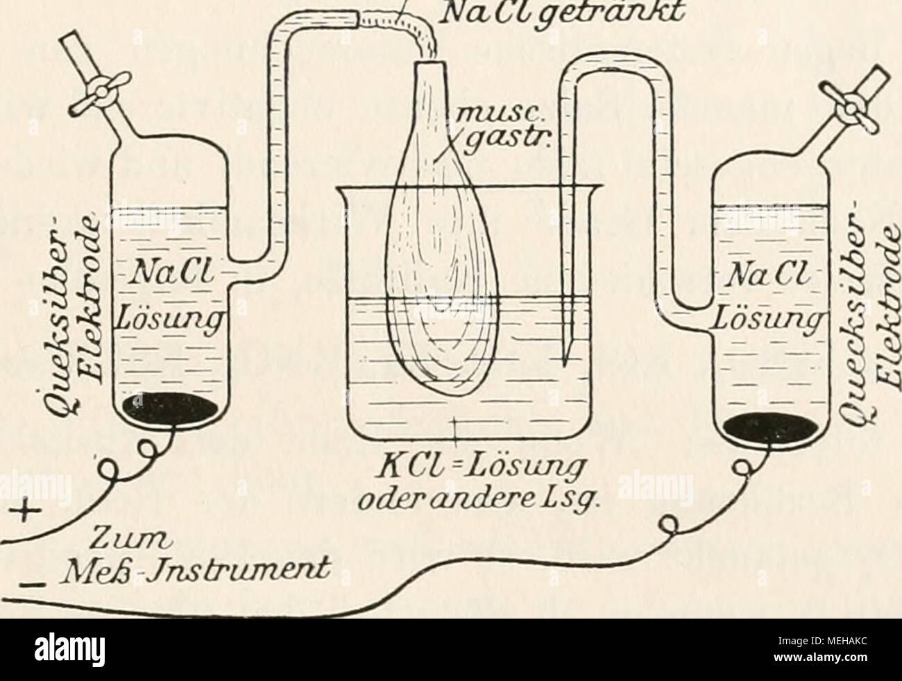 . Die Entstehung elektrischer Ströme in lebenden Geweben und ihre künstliche Nachahmung durch synthetische organische Substanzen; experimentelle Untersuchungen . Messung des Muskelstroms bei wechselnder asymmetrischer Ableitung. Um sicher zu sein, daß nur der negativierende Kalisalzelfekt gemessen wird, füllt man das Becherglas zunächst mit NaCl-Lösung und Nernst angegeben und experimentell bestätigt. Später vervollkommnete Planck die Methode der Berechnung. Nach dieser Theorie, die thermodynamisch be- gründet ist, hängt die PotentialdiiTerenz im wesentlichen von der Differenz der Wanderungsge Stock Photo