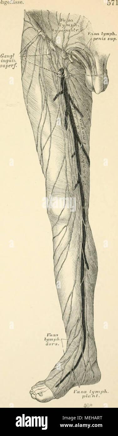 Groß äußeren Weiblichen Fortpflanzungssystem Anatomie Bilder ...