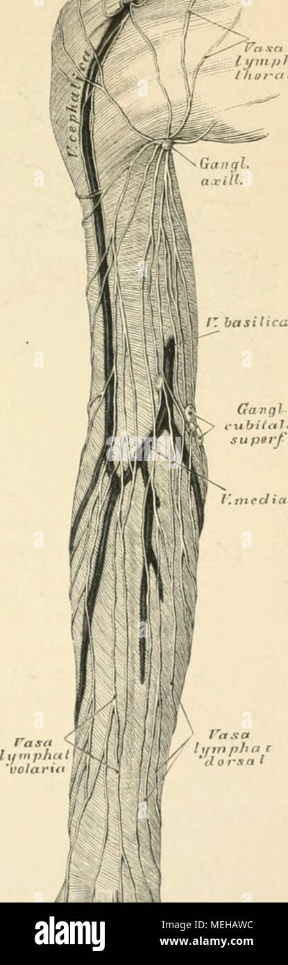 Großartig Huhn Eileiter Anatomie Galerie - Anatomie Von Menschlichen ...